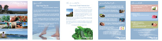 Living Synergy services A4 coloured brochure